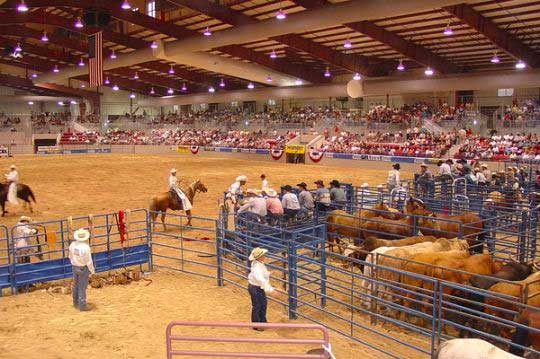 Rodeo at the Jacksonville Equestrian Center